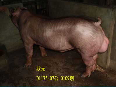 台灣動物科技研究所竹南檢定站10109期D1175-07拍賣相片