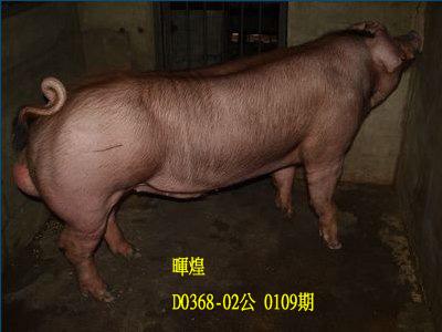 台灣動物科技研究所竹南檢定站10109期D0368-02拍賣相片