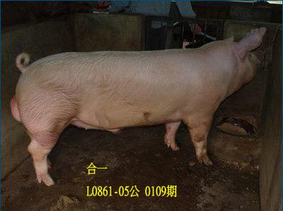 台灣動物科技研究所竹南檢定站10109期L0861-05拍賣相片