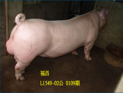 台灣動物科技研究所竹南檢定站10109期L1549-02拍賣相片