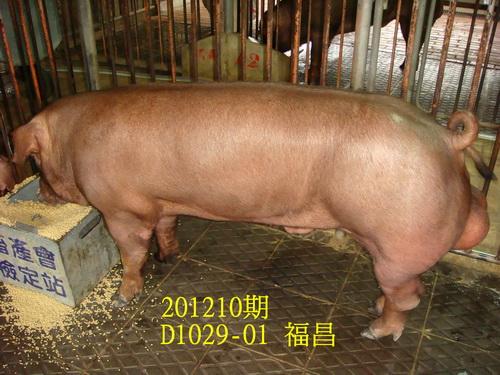 中央畜產會201210期D1029-01拍賣照片