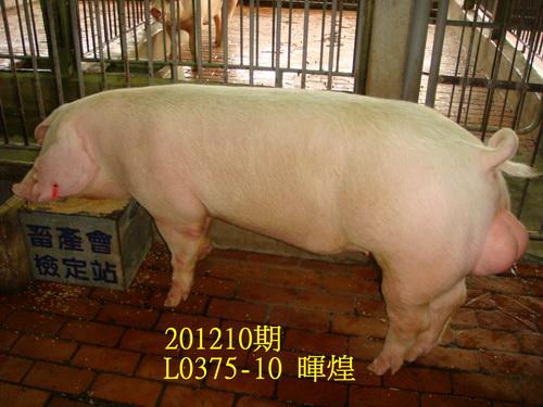 中央畜產會201210期L0375-10拍賣照片
