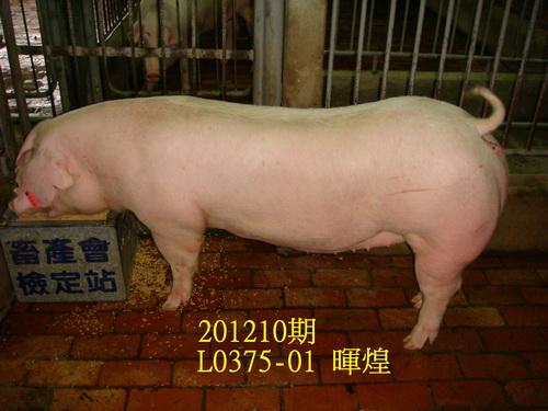 中央畜產會201210期L0375-01拍賣照片
