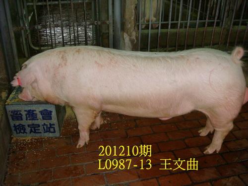 中央畜產會201210期L0987-13拍賣照片