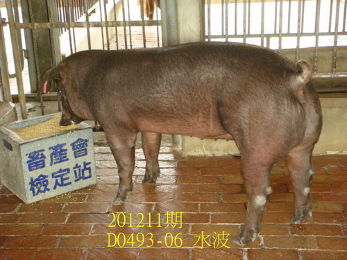 中央畜產會201211期D0493-06拍賣照片