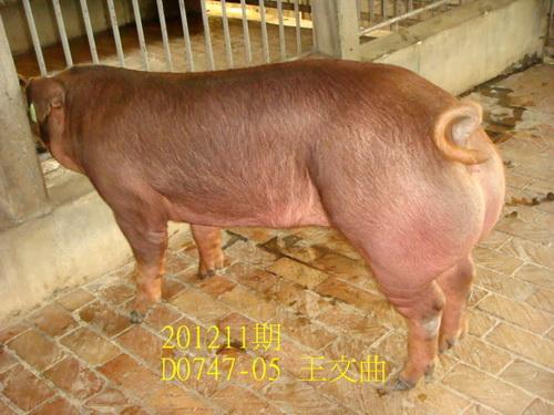中央畜產會201211期D0747-05拍賣照片