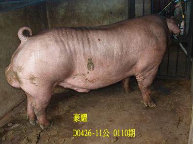 台灣動物科技研究所竹南檢定站10110期D0426-11拍賣相片