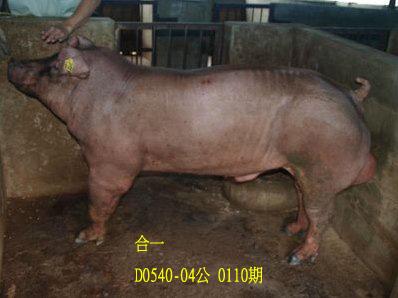 台灣動物科技研究所竹南檢定站10110期D0540-04拍賣相片