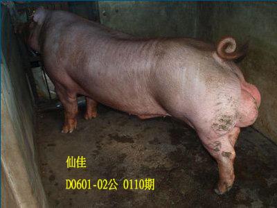 台灣動物科技研究所竹南檢定站10110期D0601-02拍賣相片