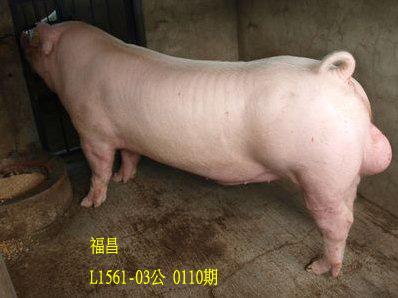 台灣動物科技研究所竹南檢定站10110期L1561-03拍賣相片