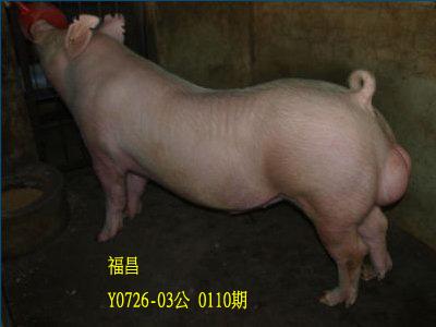 台灣動物科技研究所竹南檢定站10110期Y0726-03拍賣相片