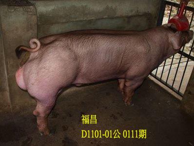 台灣動物科技研究所竹南檢定站10111期D1101-01拍賣相片