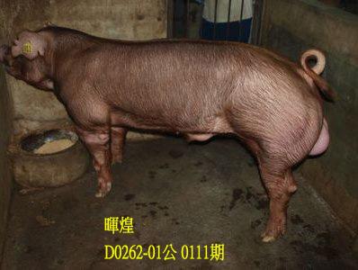 台灣動物科技研究所竹南檢定站10111期D0262-01拍賣相片