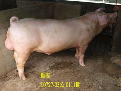 台灣動物科技研究所竹南檢定站10111期L0727-03拍賣相片