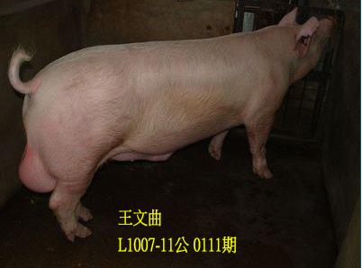 台灣動物科技研究所竹南檢定站10111期L1007-11拍賣相片