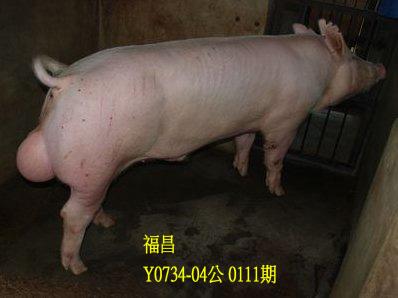 台灣動物科技研究所竹南檢定站10111期Y0734-04拍賣相片