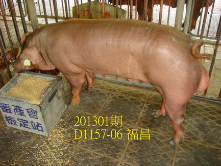 中央畜產會201301期D1157-06拍賣照片