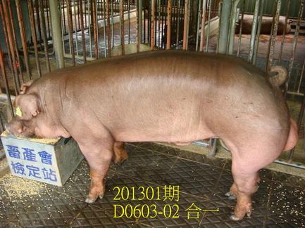 中央畜產會201301期D0603-02拍賣照片