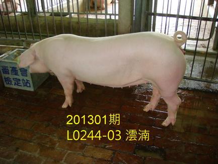 中央畜產會201301期L0244-03拍賣照片