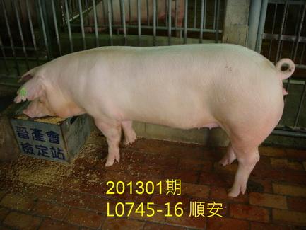 中央畜產會201301期L0745-16拍賣照片