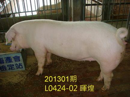 中央畜產會201301期L0424-02體型-全身相片
