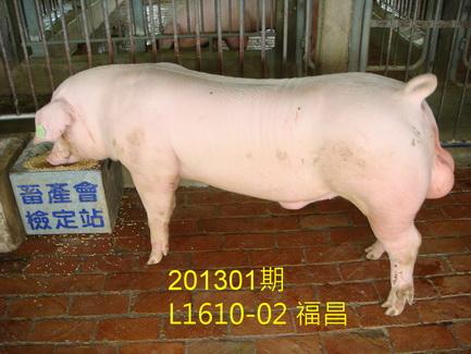 中央畜產會201301期L1610-02拍賣照片
