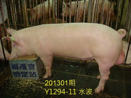 中央畜產會201301期Y1294-11拍賣照片