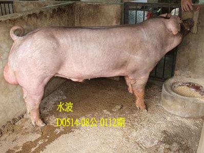 台灣動物科技研究所竹南檢定站10112期D0514-08拍賣相片