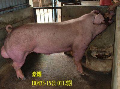 台灣動物科技研究所竹南檢定站10112期D0433-15拍賣相片