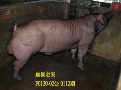 台灣動物科技研究所竹南檢定站10112期F0120-02拍賣相片