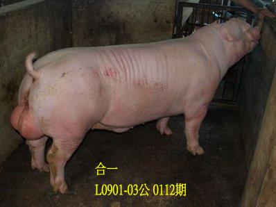 台灣動物科技研究所竹南檢定站10112期L0901-03拍賣相片