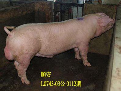 台灣動物科技研究所竹南檢定站10112期L0743-03拍賣相片