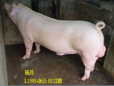 台灣動物科技研究所竹南檢定站10112期L1595-06拍賣相片