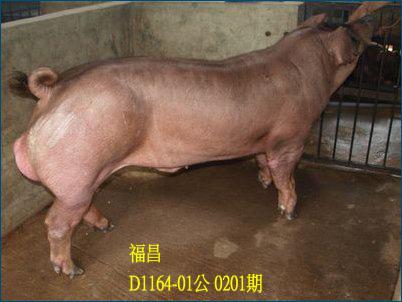 台灣動物科技研究所竹南檢定站10201期D1164-01拍賣相片