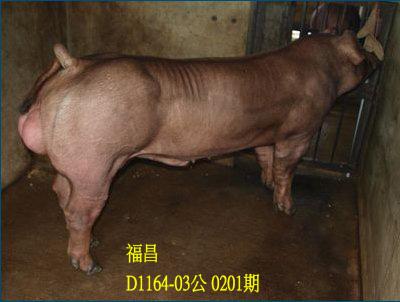 台灣動物科技研究所竹南檢定站10201期D1164-03拍賣相片