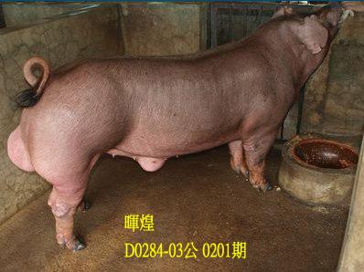 台灣動物科技研究所竹南檢定站10201期D0286-03拍賣相片