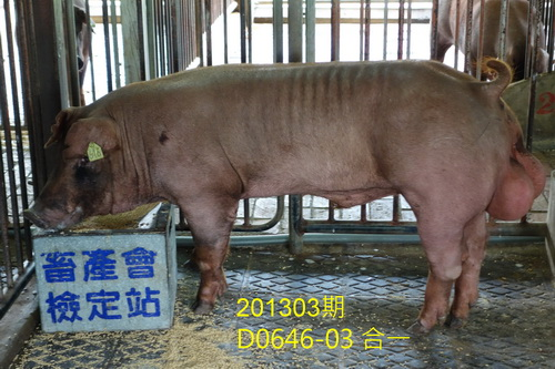 中央畜產會201303期D0646-03拍賣照片