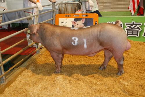 中央畜產會201303期D0527-02拍賣照片(高價豬)