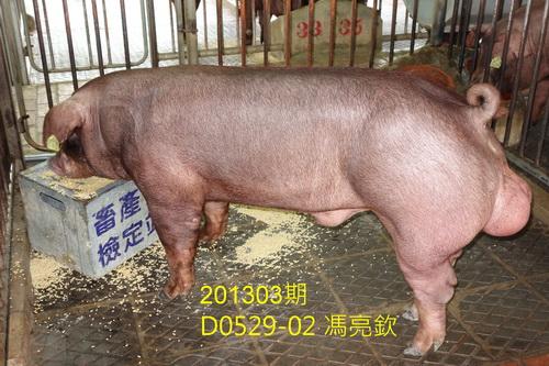 中央畜產會201303期D0529-02拍賣照片