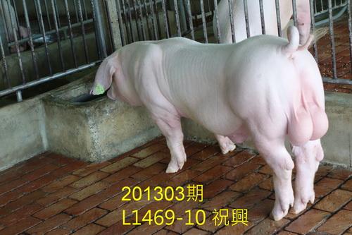 中央畜產會201303期L1469-10拍賣照片