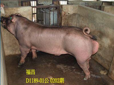 台灣動物科技研究所竹南檢定站10202期D1189-01拍賣相片