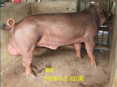 台灣動物科技研究所竹南檢定站10202期D0700-01拍賣相片