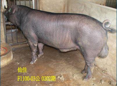台灣動物科技研究所竹南檢定站10202期F1100-03拍賣相片