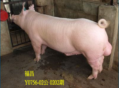 台灣動物科技研究所竹南檢定站10202期Y0756-02拍賣相片