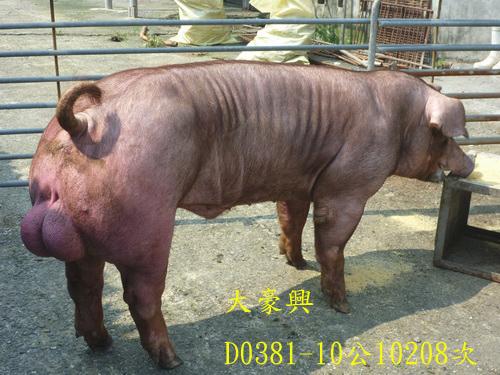 台灣區種豬產業協會10208期D0381-10側面相片