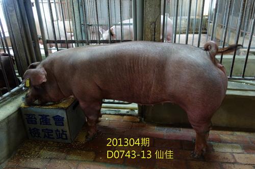 中央畜產會201304期D0743-13拍賣照片