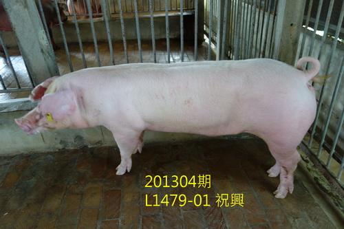 中央畜產會201304期L1479-01拍賣照片