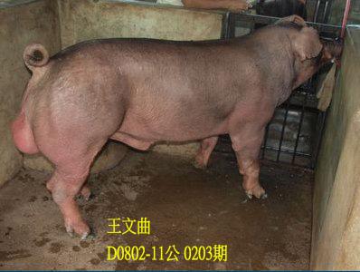 台灣動物科技研究所竹南檢定站10203期D0802-11拍賣相片