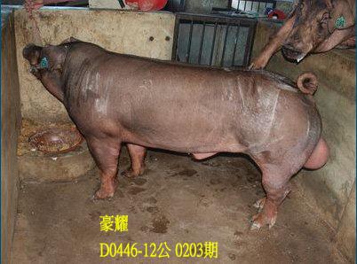 台灣動物科技研究所竹南檢定站10203期D0446-12拍賣相片