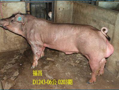 台灣動物科技研究所竹南檢定站10203期D1243-06拍賣相片